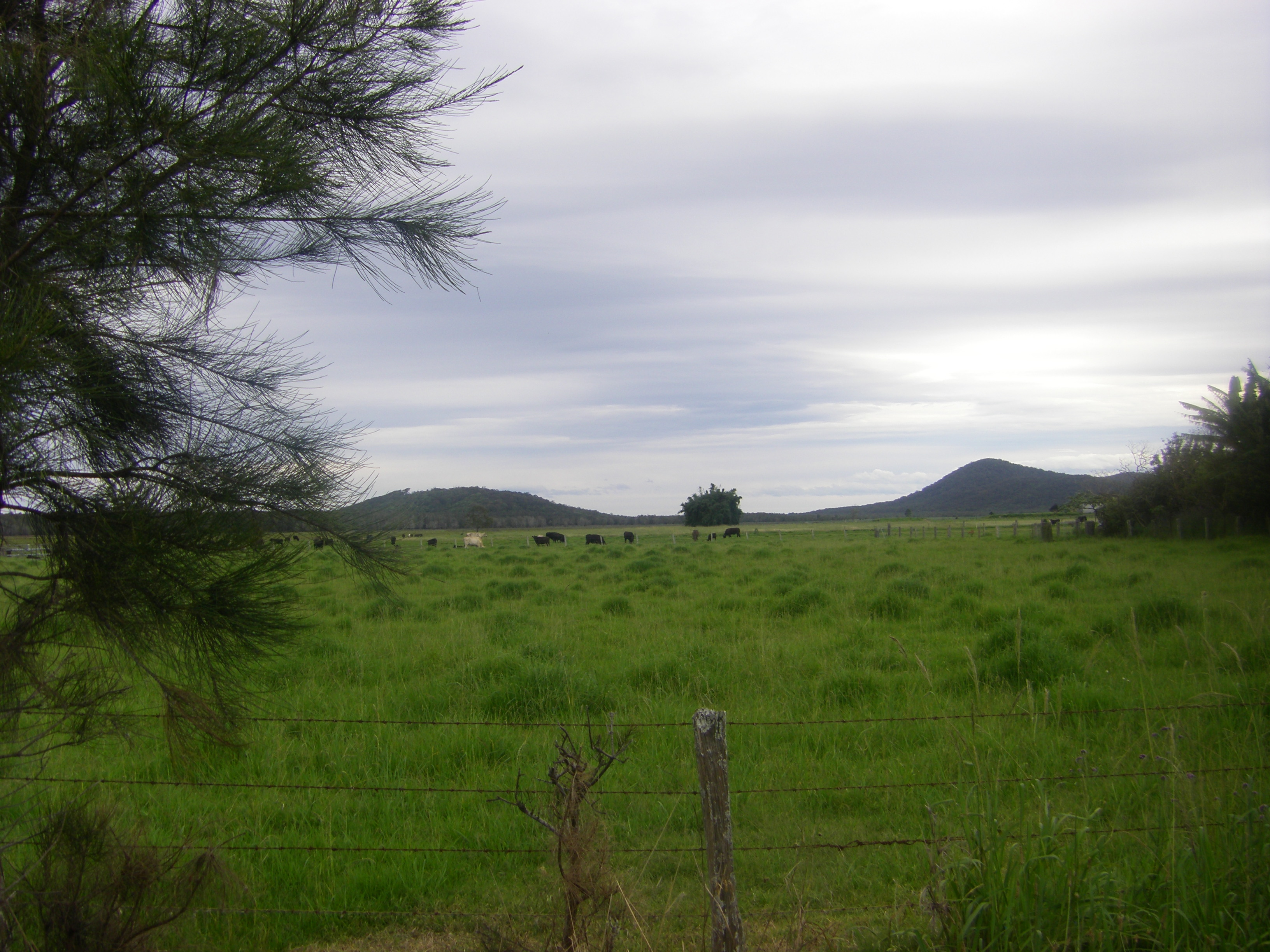 Farm Land near where Gormley Family Resided Belmore River NSW