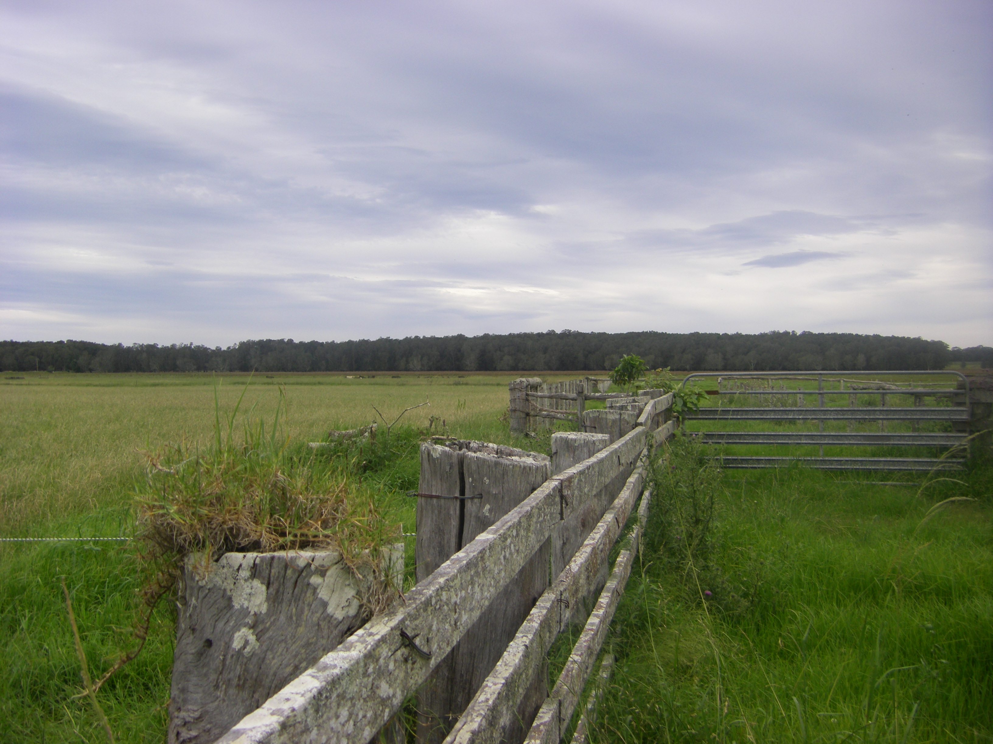 Gormley Farm Land near where Gormleys owned land. Belmore River NSW